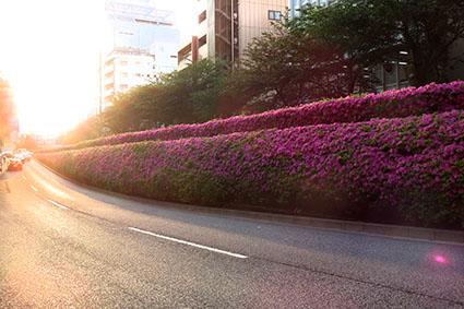 桜の次は、ツツジが見ごろです@広尾_f0165332_19290511.jpg