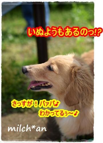 b0115642_1633232.jpg