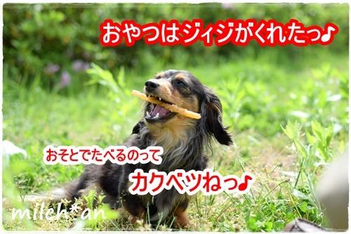 b0115642_16436.jpg