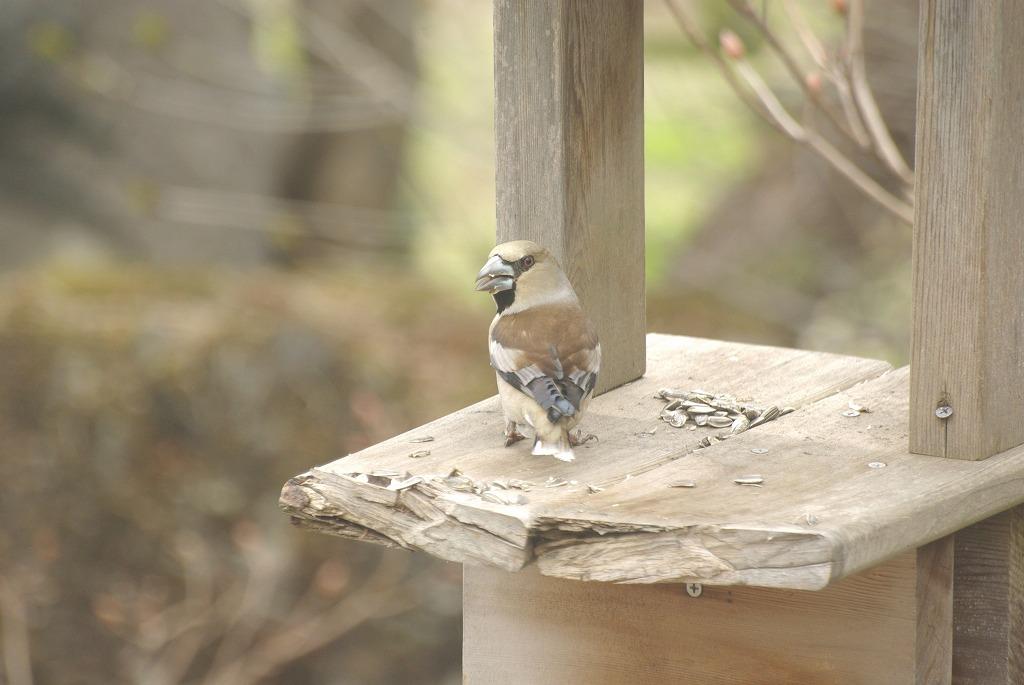 鳥もやって来ました_a0107184_0162235.jpg