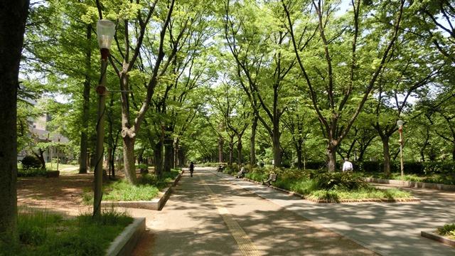 大阪都市構想頑張れ橋下徹市長、元気な町に元気な子供の声頑張れ今村岳司市長、小保方STAP細胞の存在_d0181492_0413699.jpg
