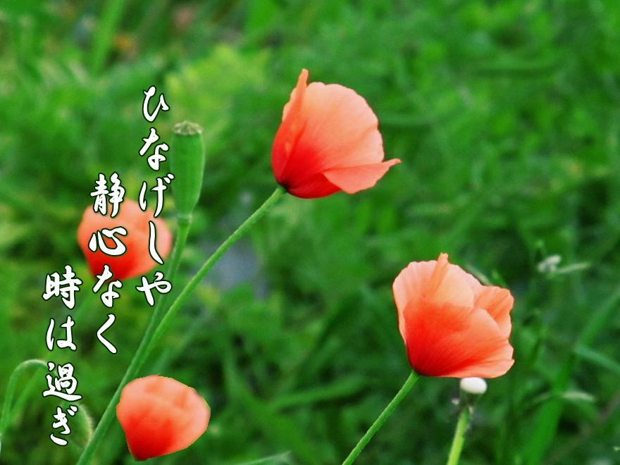f0137096_16202562.jpg