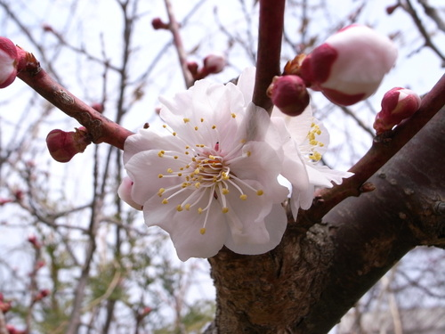 公園の花など_f0138096_13282024.jpg