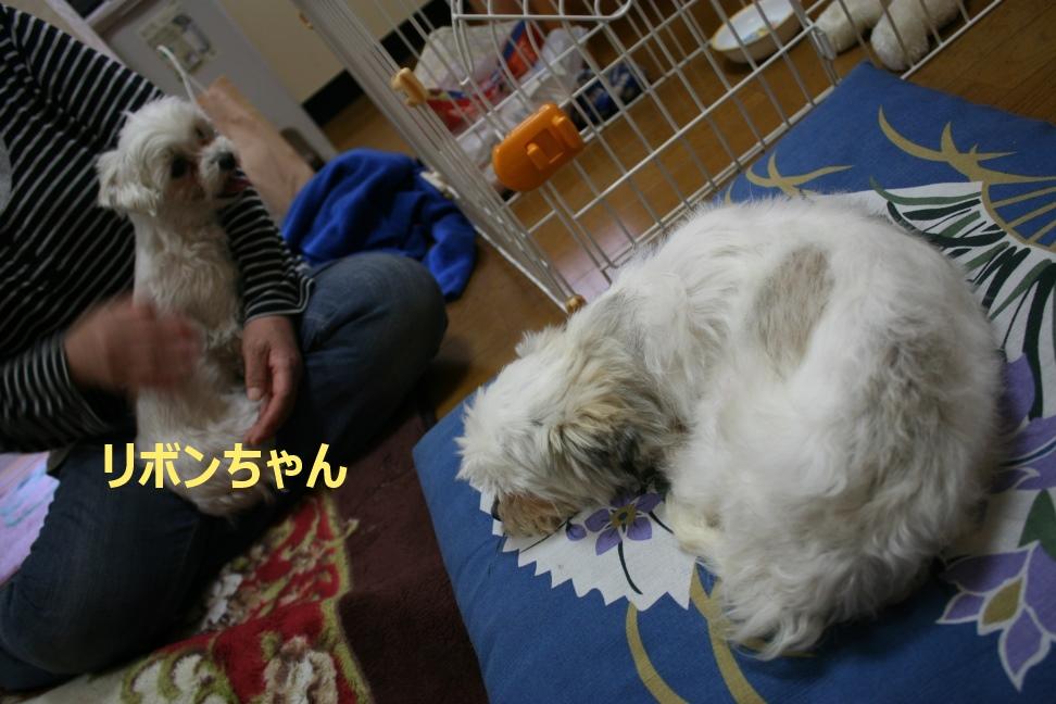 モモちゃん 新生活スタート!_f0242002_8475051.jpg