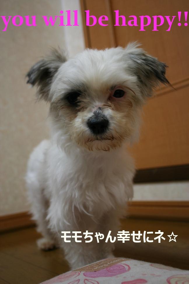 モモちゃん 新生活スタート!_f0242002_8512035.jpg