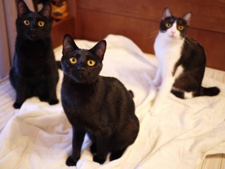 いろいろなお手伝い猫 ぎゃぉすてぃぁらみるきぃ編。_a0143140_21411288.jpg
