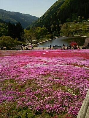 芝桜とお城_a0272042_020722.jpg