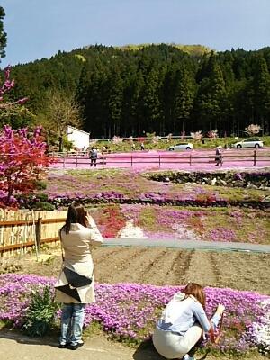 芝桜とお城_a0272042_0214359.jpg
