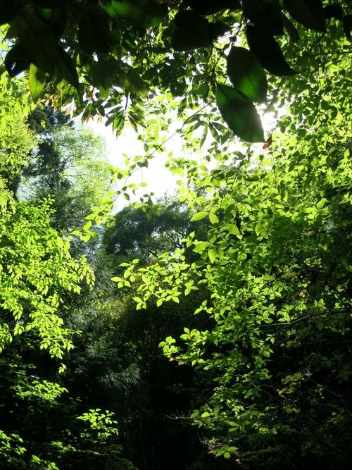 GW限定『森のカフェ』で至福の一杯♥_f0236260_047209.jpg
