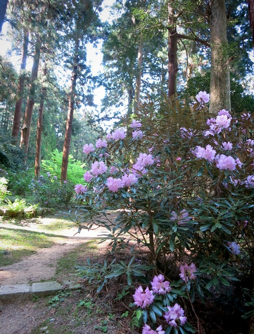 GW限定『森のカフェ』で至福の一杯♥_f0236260_102969.jpg