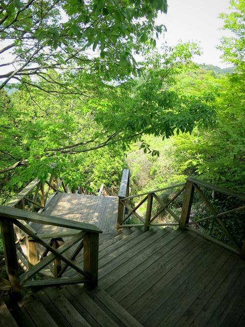 GW限定『森のカフェ』で至福の一杯♥_f0236260_215148.jpg