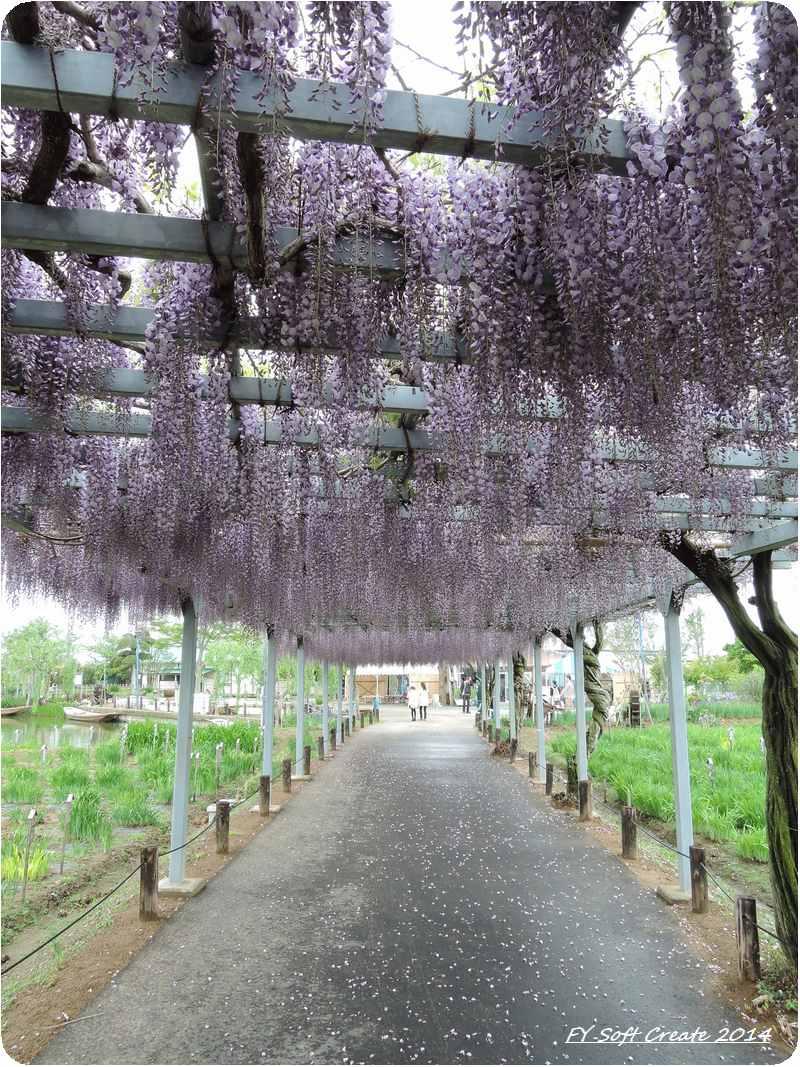 ◆ 「水郷佐原水生植物園」へ (2014年5月)_d0316868_1826552.jpg