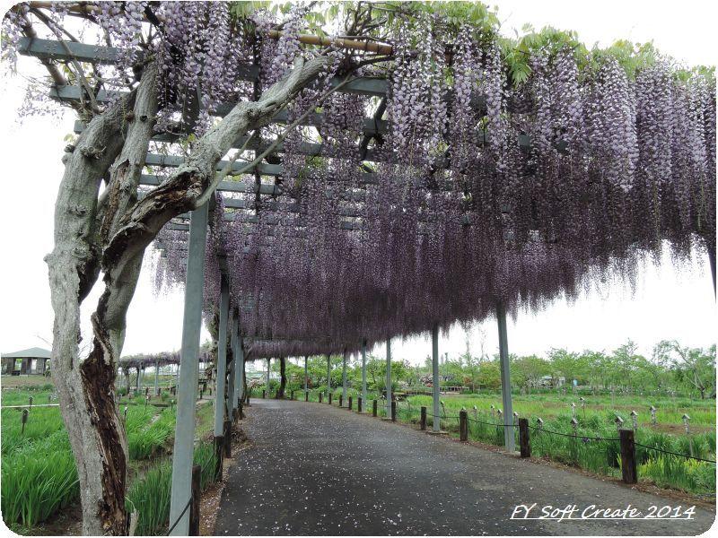 ◆ 「水郷佐原水生植物園」へ (2014年5月)_d0316868_18284626.jpg