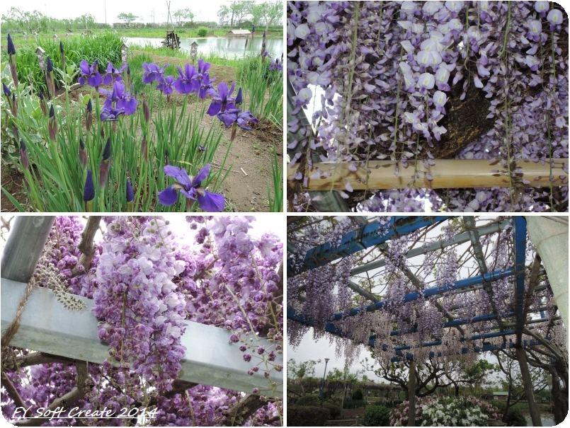 ◆ 「水郷佐原水生植物園」へ (2014年5月)_d0316868_1843595.jpg