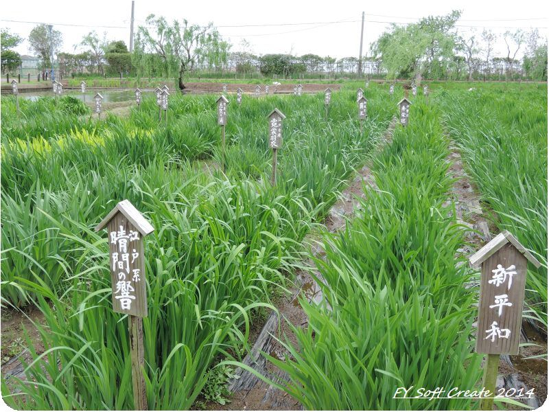 ◆ 「水郷佐原水生植物園」へ (2014年5月)_d0316868_18444088.jpg