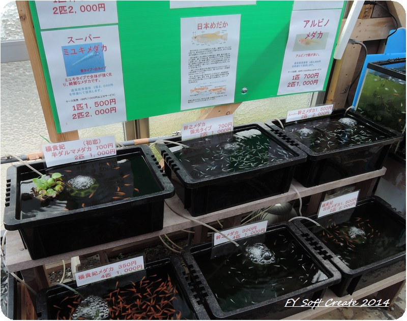 ◆ 「水郷佐原水生植物園」へ (2014年5月)_d0316868_18523178.jpg