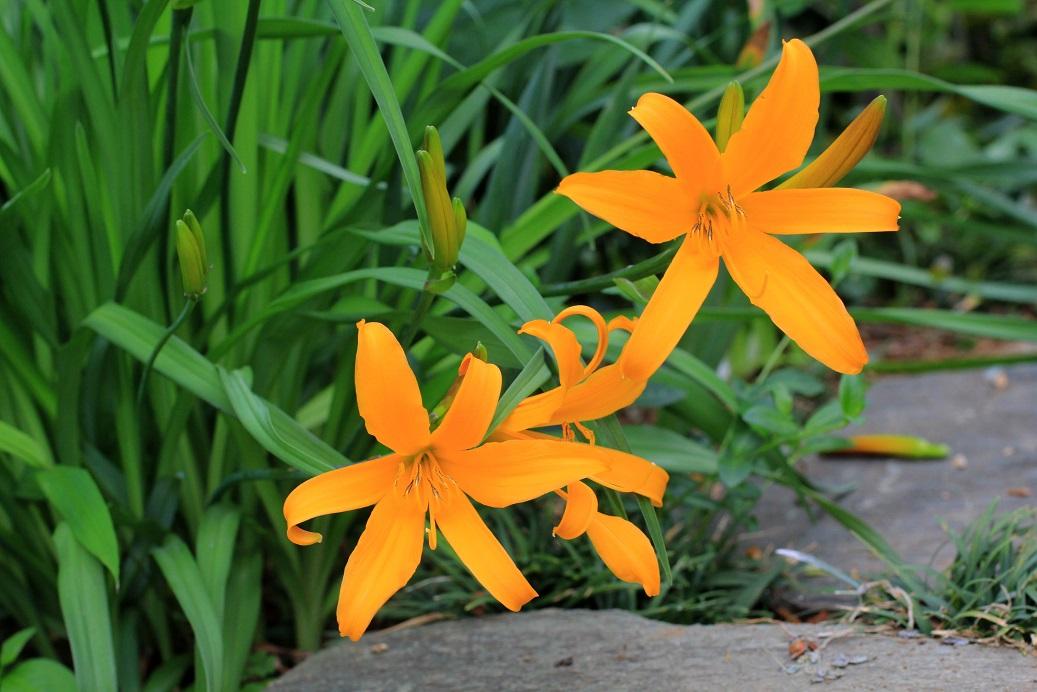 帰って来ると。。。そこは花園   _a0107574_19240877.jpg