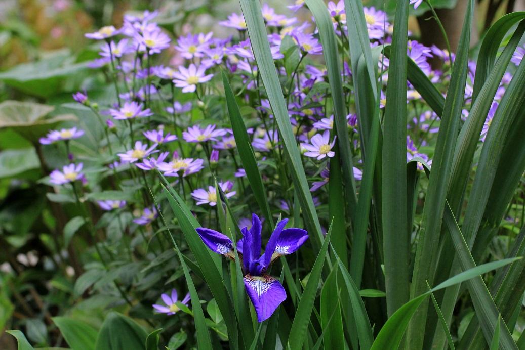 帰って来ると。。。そこは花園   _a0107574_19241926.jpg