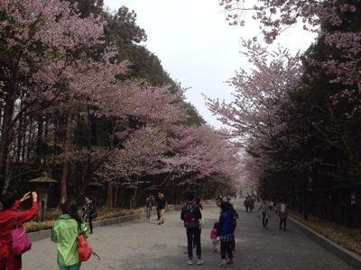 桜〜🌸_a0165694_128082.jpg
