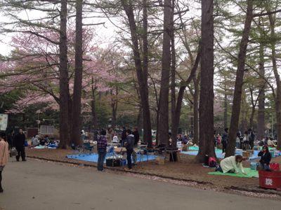 桜〜🌸_a0165694_128177.jpg