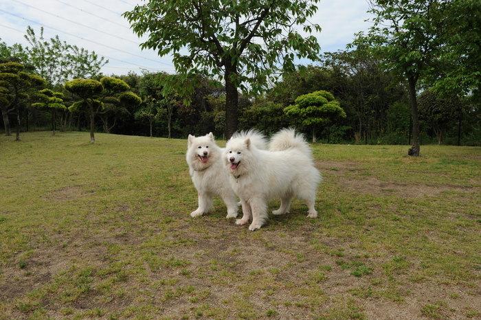 うどんキャンプ in五色台 part1_a0049296_201126.jpg