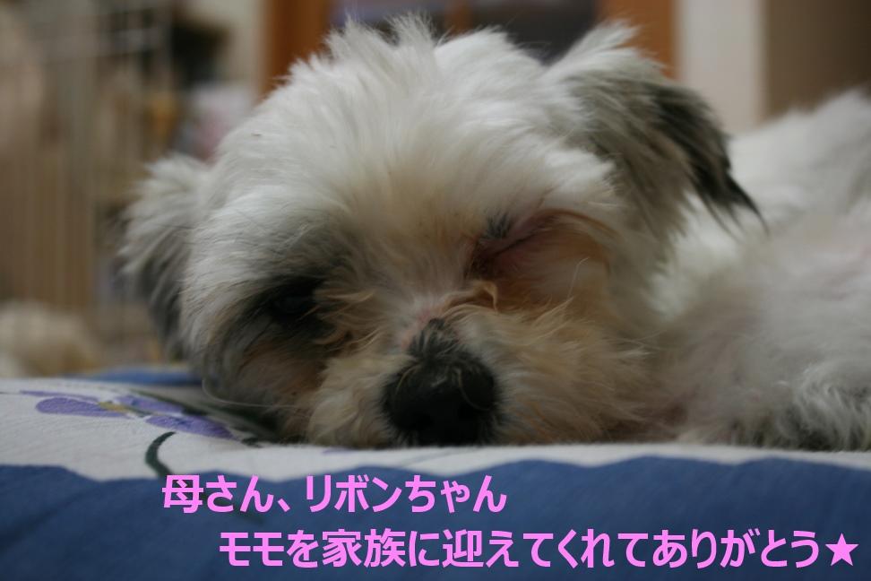 モモちゃん 新生活スタート!_f0242002_95431.jpg