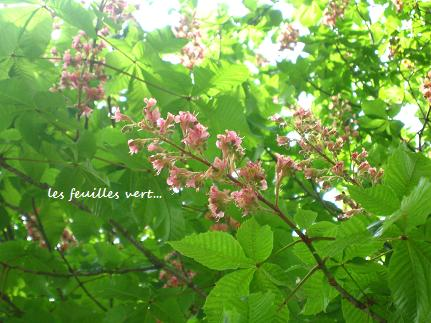 花と緑あふれるヨーロピアンな世界に♪_c0098807_2211576.jpg