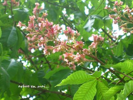 花と緑あふれるヨーロピアンな世界に♪_c0098807_22152492.jpg