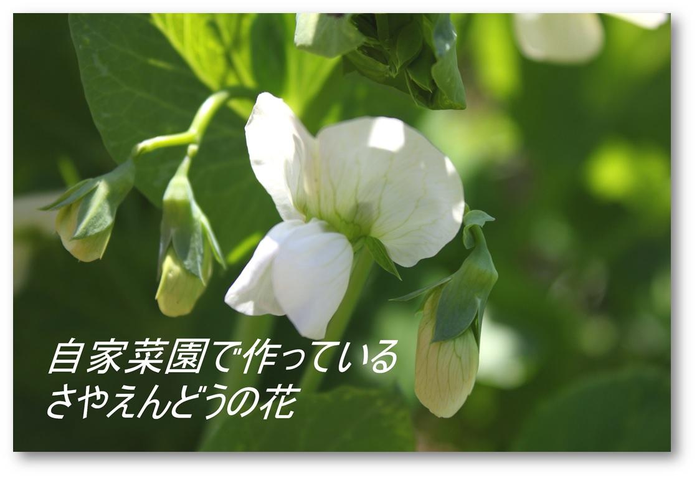 ☆ご無沙汰しています(^^)☆_a0161111_1847630.jpg