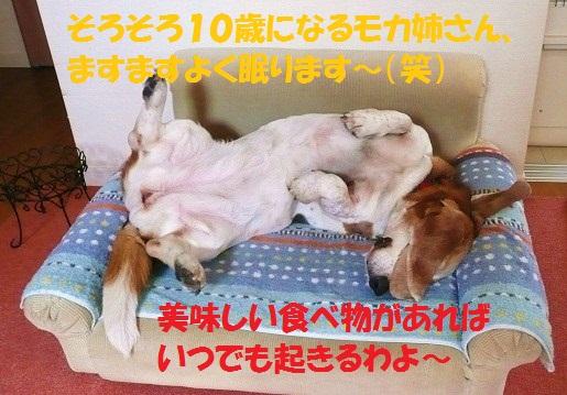 f0121712_13353690.jpg