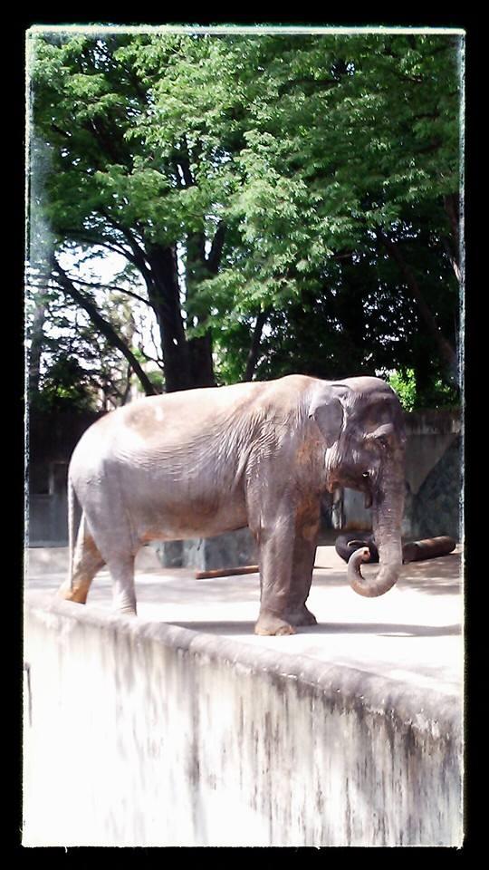 井の頭自然文化園_e0075673_1143167.jpg