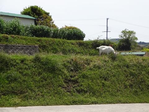 淡路島へ行ってきました_e0201281_2119613.jpg