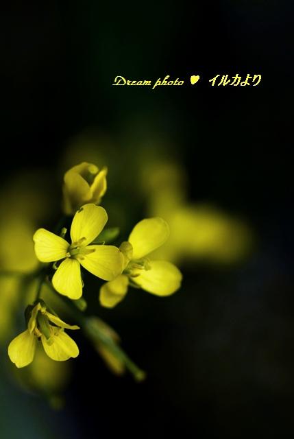 f0304384_1356432.jpg