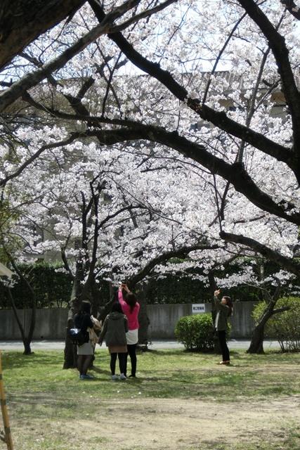 神戸女学院関西学院大学を文化都市遺産に、今村岳司市長大学の有効活用を、西宮市は大学文化が観光資源_d0181492_14505313.jpg