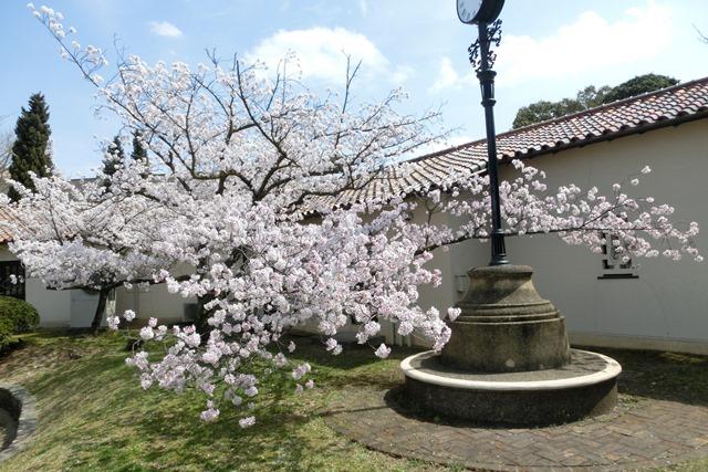今村岳司市長に期待名門大学の有効利用、素敵な神戸女学院に期待、憧れの神戸女学院大学の教育環境_d0181492_14585441.jpg