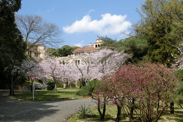 今村岳司市長に期待名門大学の有効利用、素敵な神戸女学院に期待、憧れの神戸女学院大学の教育環境_d0181492_1503091.jpg