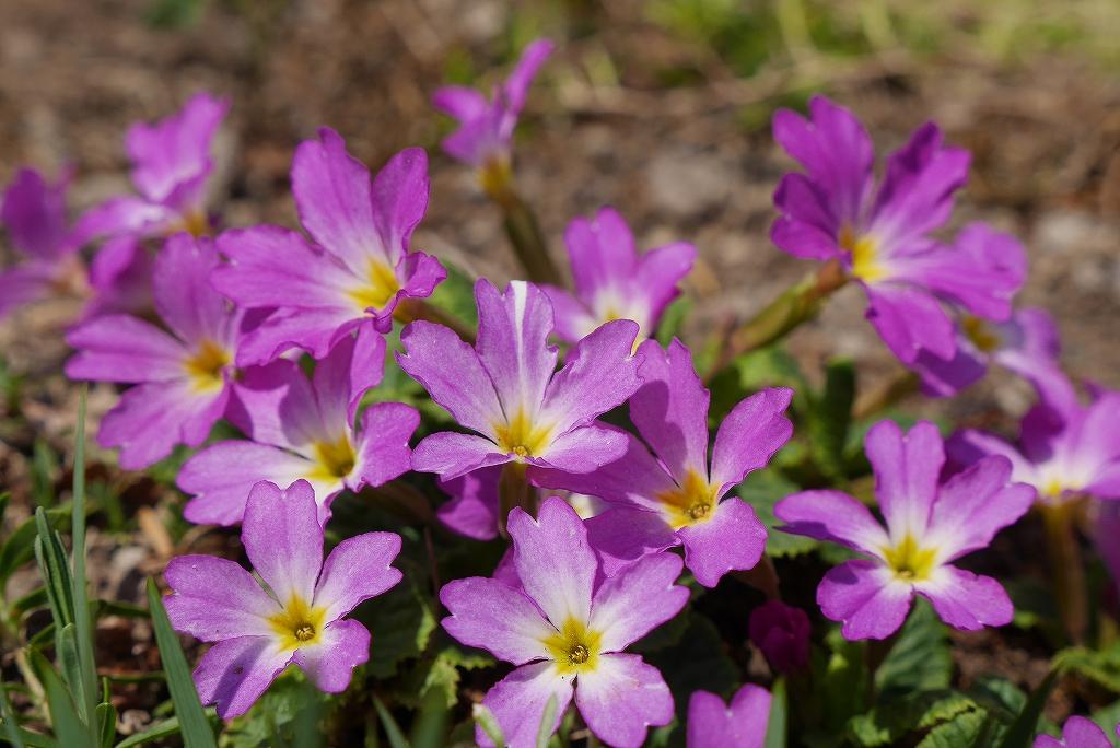 庭の花、第2弾_f0138096_14342086.jpg