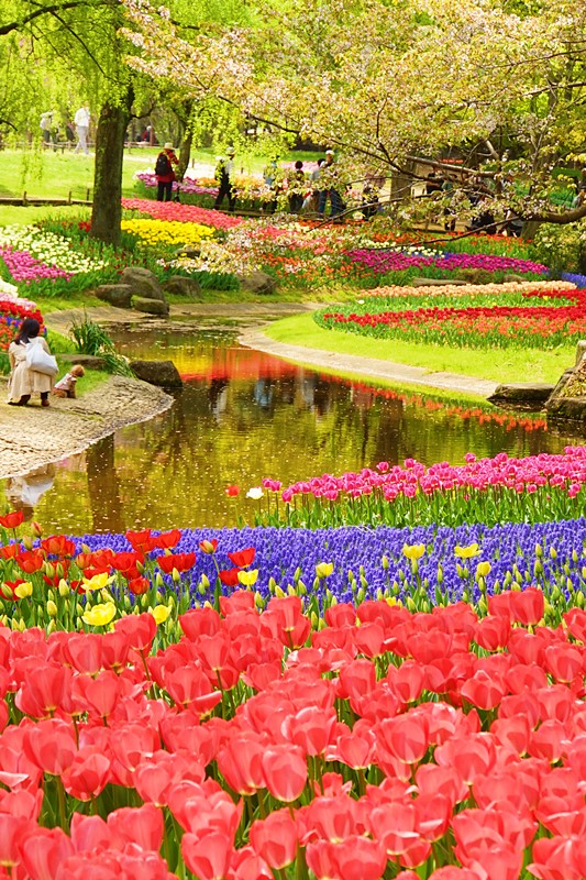 昭和記念公園 チューリップ 2014_b0145398_20183276.jpg