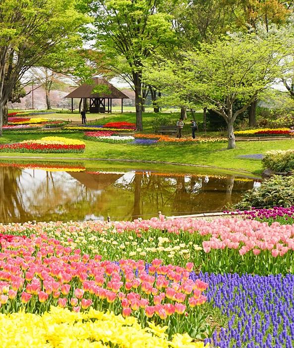 昭和記念公園 チューリップ 2014_b0145398_2018827.jpg