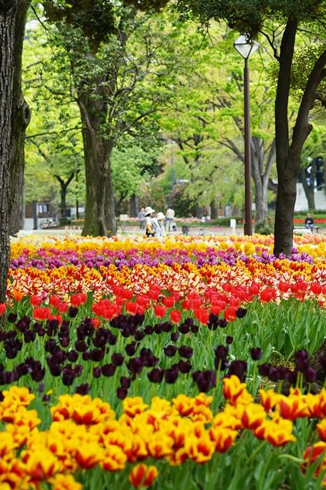 横浜公園 チューリップ 2014_b0145398_2031477.jpg