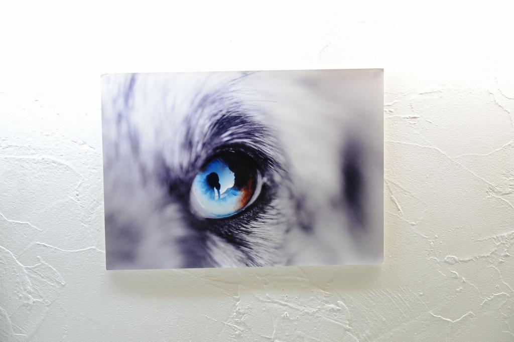 葉山芸術祭 犬猫時間7_d0065116_22104874.jpg