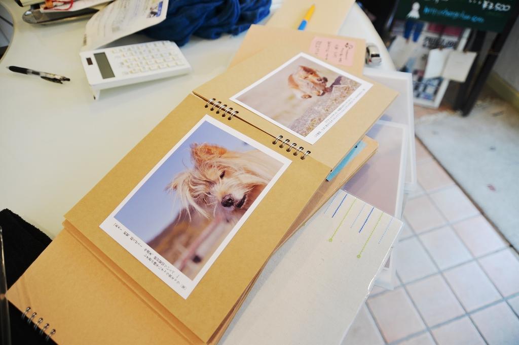 葉山芸術祭 犬猫時間7_d0065116_22114414.jpg