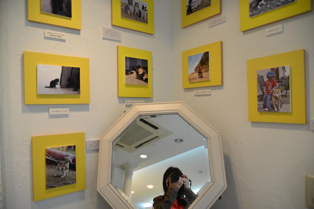 葉山芸術祭 犬猫時間7_d0065116_22115326.jpg