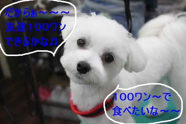 b0130018_22535186.jpg
