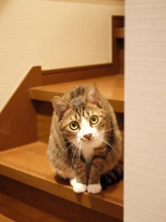 猫のお友だち じょあんちゃんはんくすちゃんあーるくんもんてぃーくん編。_a0143140_22323059.jpg