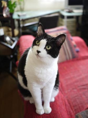 猫のお友だち じょあんちゃんはんくすちゃんあーるくんもんてぃーくん編。_a0143140_223326100.jpg
