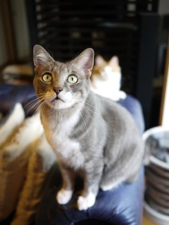 猫のお友だち じょあんちゃんはんくすちゃんあーるくんもんてぃーくん編。_a0143140_22342036.jpg