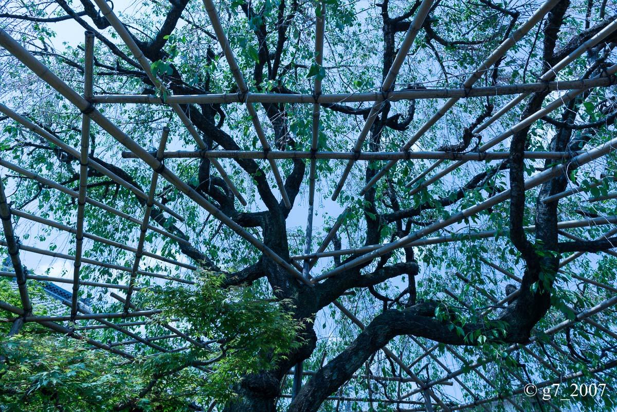 地蔵院(椿寺)..._f0152550_23141691.jpg