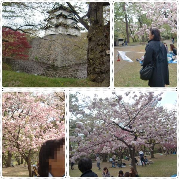 弘前城の桜_b0236665_1132429.jpg