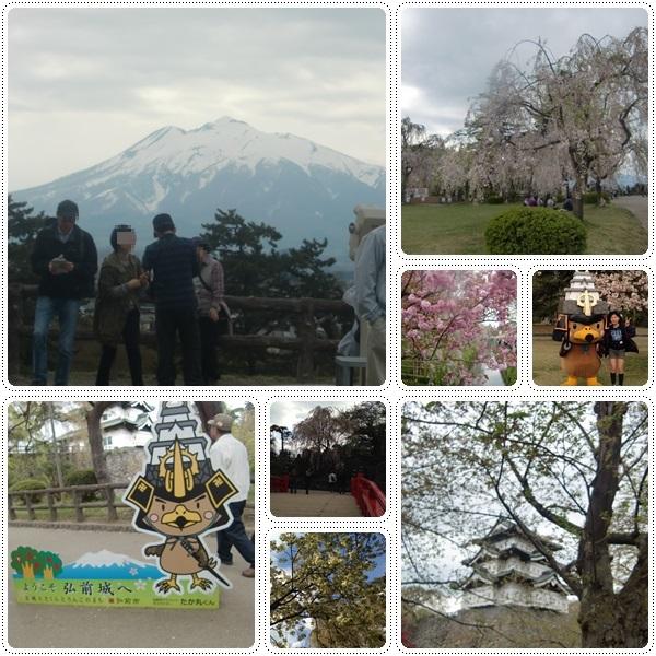 弘前城の桜_b0236665_11523878.jpg
